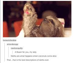 Funny Sloth Pictures Meme - all things sloth pictures and memes of sloths