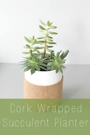 diy cork wrapped succulent planter monthly diy challenge the