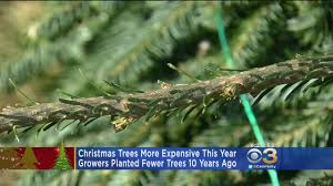 trees will be more expensive this year cbs philly