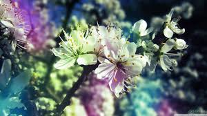 75 entries in spring pictures wallpapers group