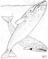 Whales Coloring Pages Free Coloring Pages Whale Color Page