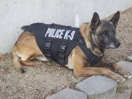belgian malinois police wpd asking for community u0027s help in wake of k9 u0027s death local news