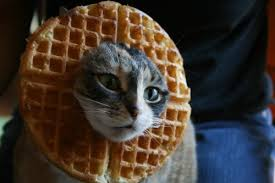 Cat In Bread Meme - cat breading costume