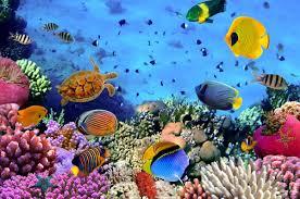 28 sea life wall murals ocean life wall mural amp ocean sea life wall murals sea life wall murals underwater photo wallpaper