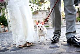 Pet Photo Albums How To Plan A Pet Friendly Wedding Fizara Diy Photo Albums Diy