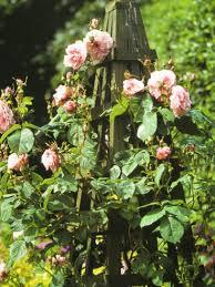 Trellis For Climbers Growing Climbing Roses Climbing Rose Varieties Climbing Roses Garden