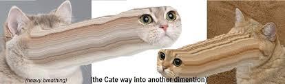 Cat Heavy Breathing Meme - meme heavy breathing