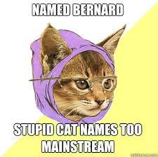 Stupid Cat Meme - named bernard stupid cat meme cat planet cat planet