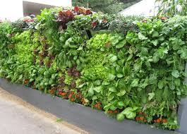 vertical vegetable garden vertical vegetable garden demo at the