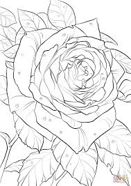 oklahoma rose coloring free printable coloring pages