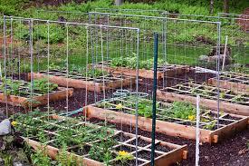 Advantage Of Raised Garden Beds - advantages of raised bed vegetable garden video