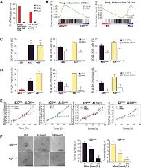 Fbs Floor Box by Targeting Prostate Cancer Subtype 1 By Forkhead Box M1 Pathway
