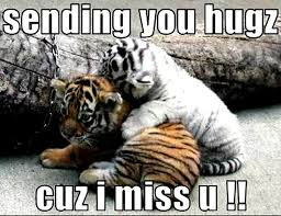 Tiger Meme - top 10 funny tiger pictures you didn t know science facts