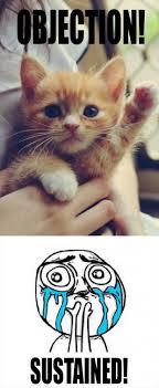 Cute Kitten Memes - funny cute kitten dump a day