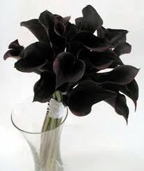 black calla black calla lilies flora black calla calla