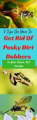 5 tips on how to get rid of pesky dirt dobbers in your house and