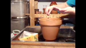 starting seeds indoors container herb garden youtube