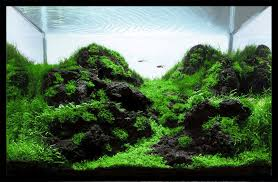 Aquascape Moss Inspiration This Tank Uses Only Black Hardscape And Moss To