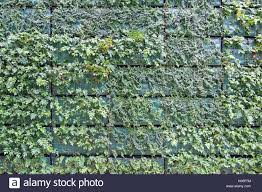 Vertical Wall Garden Plants by Green Wall Vertical Garden Grid With New Fresh Plants Stock Photo