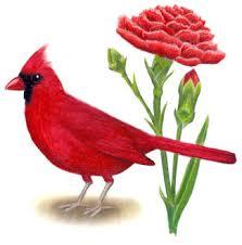 state bird of south dakota south dakota state bird and flower flowers ideas for review