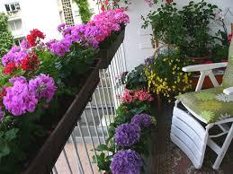 blumenkã sten balkon wohnzimmerz blumen für balkon with geranien blã ten blumen sommer