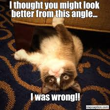 81 best grumpy cat images on pinterest ha ha funny stuff and