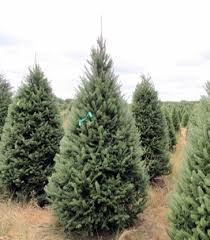christmas tree delivery get your real christmas tree delivered today