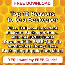 Raising Bees In Backyard by Adventures In Raising Honey Bees Countryside Network