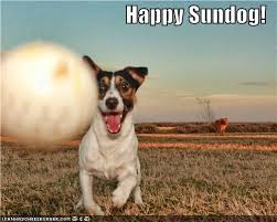 Happy Dog Meme - happy sundog i has a hotdog dog pictures funny pictures of