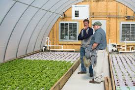 producers going soilless to grow vegetables extension daily