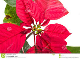 christmas tree with red leaves stock images image 36004574