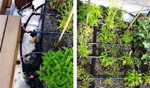 come realizzare un giardino pensile come realizzare un giardino pensile o un tetto verde in 5 passi