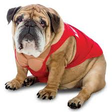 pet costume halloween zelda life guard dog costume with same day shipping baxterboo