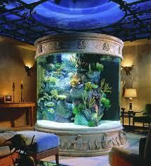 ornamental fish aquarium february 2010