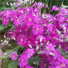 japanese native plants 10 beautiful japanese flowers and their meanings tsunagu japan