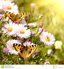 two butterfly on flowers stock images image 13468474
