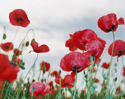 long weekend remembrance day ec vancouver blog
