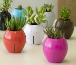 How To Make A Self Watering Planter by How To Make A Self Watering Planter Green Diary Green