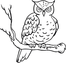 owl with strong fur coloring pages for kids eda printable owls