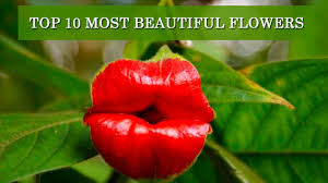 Beautiful Flower Pictures Top 10 Most Beautiful Flowers In The World Youtube