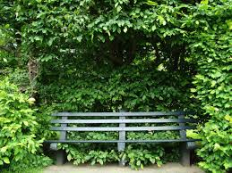 hidden bench free stock photo public domain pictures