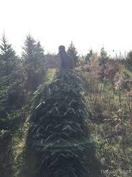 tree farm tradition the unique nest