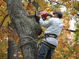 tree removal tysons tree service