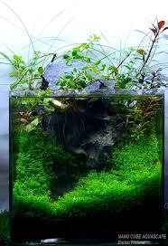 125 best aquarium images on pinterest aquascaping aquarium