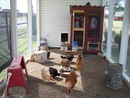 my chicken farmhouse community chickens