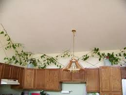 plants for on top of kitchen cabinets tinkert a planty painty project