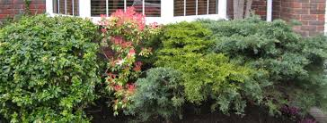 garden services in south west london anna u0027s garden