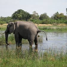 african safari animals 10 weird and wonderful facts about african animals