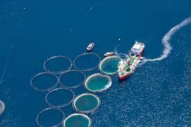 can farmed fish feed the world sustainably university of california