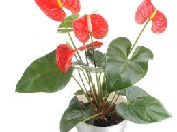 best house plants common houseplants and best indoor plants hgtv